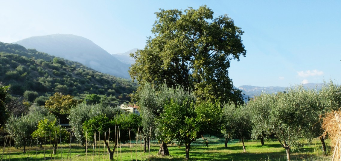 The Scaldaferri lands, where Tonino lives and our olives are grown and harvested.
