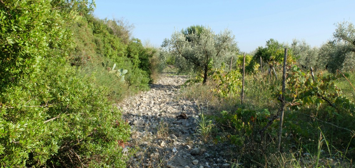 The Scaldaferri Lands where a variety of fruit and olive trees reside.